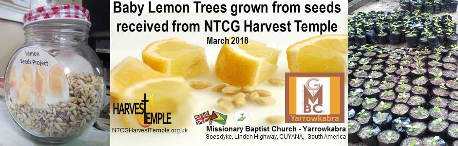 Help us collect lemon seeds for Guyana